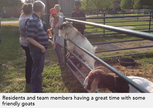 Residents and team members having a great time with some friendly goats