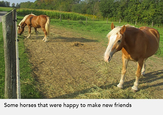 Some horses that were happy to make new friends