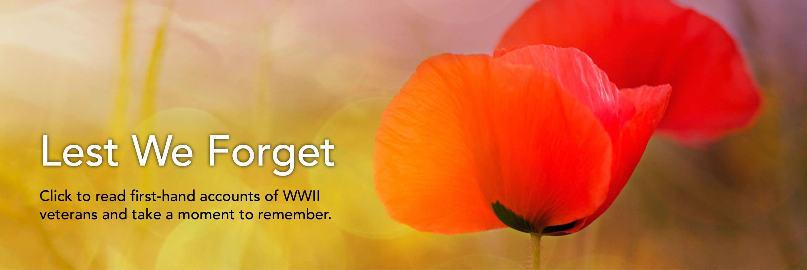 photo of a beautiful poppy flower for rememberance day