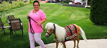 Surprise guests trot their stuff at Kingsmere Retirement