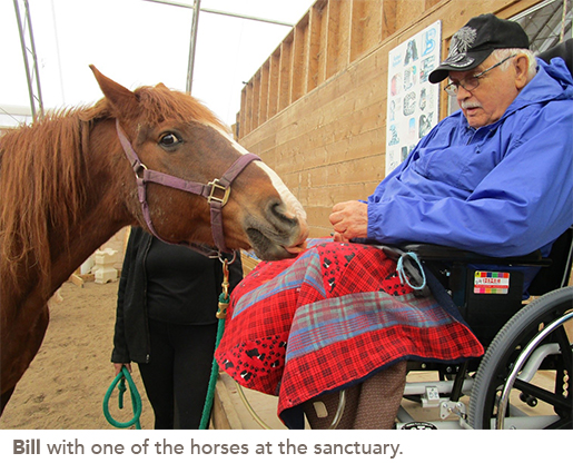 Bill with one of the horses at the sanctuary.