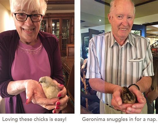 chick photos